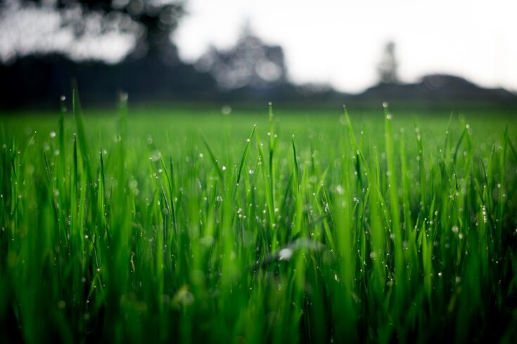 Taking care of your lawn the easy way